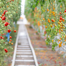 Lufa Farms, 0-km fruit and vegetables in Montreal