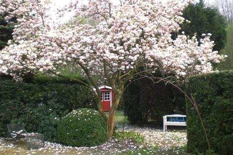 Jardín con Magnolia. Cortesía de Klaus-Dieter Bürklein