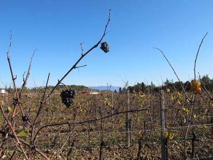 Un vino iconico per Natale: nel Collio goriziano dai Bressan (parte I)
