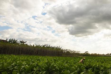 <strong>URBAN FARM</strong><br />